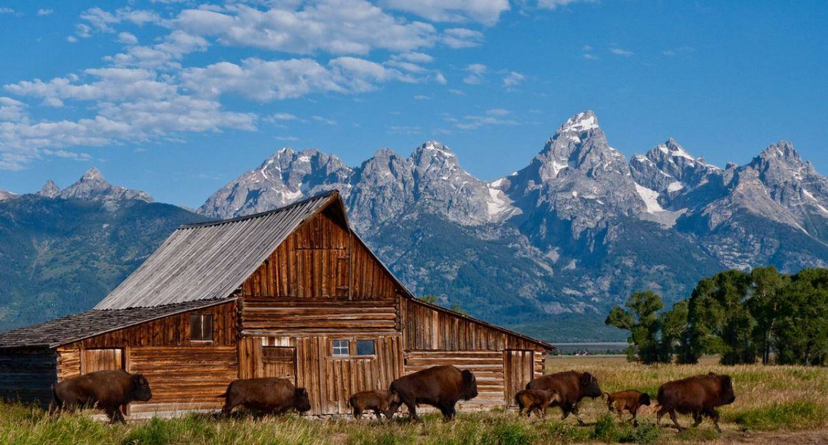 Image result for grand teton national park, antelope flats