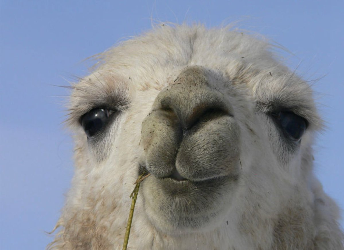 I have an obsession with llamas 💕 https:...