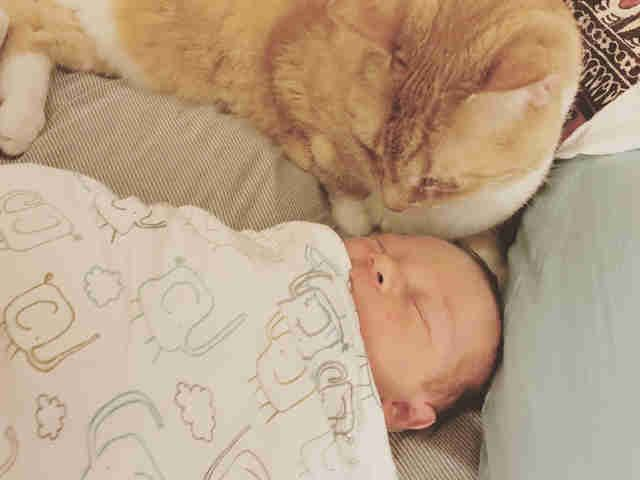 Squinty the senior cat can't stop snuggling with the new baby 💕 https://t.co/jx8xoqulQU