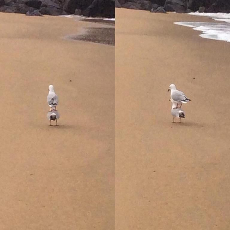 'when you see only one set of footprints...