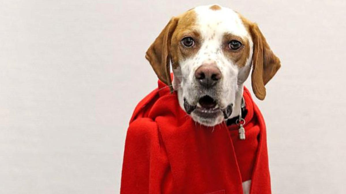 GroKo: 'Bild' meldet erfolgreich einen Hund zur SPD-Abstimmung an https://t.co/kmwYWWlRMn
