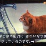 長年の謎が今解けた?猫がエサ置場で水を飲まない理由とは?