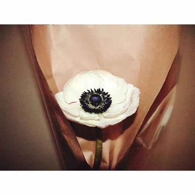 anemone.  【via Instagram: