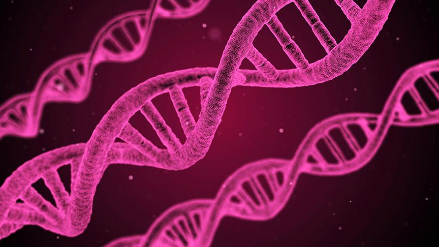 İnsan yüzünü şekillendiren 15 gen tespit...