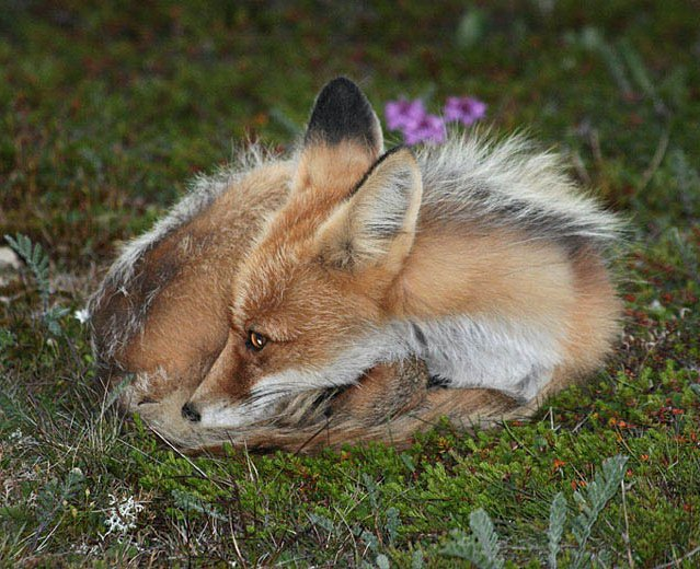 Fox afternoon movie