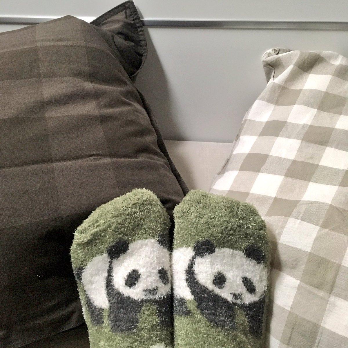 靴下かわいいので見て🐼