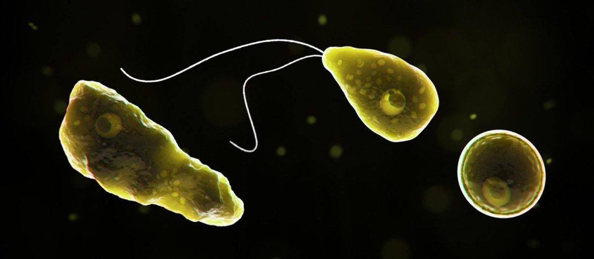 Argentina tem primeiro caso de ameba que...