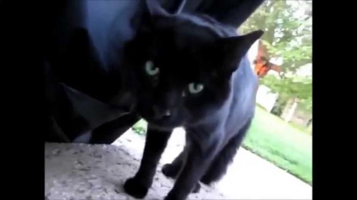 Image of: Cats Compilation Funny Cats Videos On Twitter Twitter Funny Cats Videos On Twitter