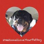 RT @WeLoveDogsUSA: RT CelebrationofDogs @dogcelebr...
