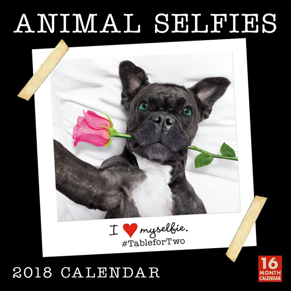 Its #LoveYourPetDay! Celebrate your favorite pet! Get inspired w/ photos & taglines from our 2018 Animal Selfies Wall Calendar now 30% off at rsvp.com w/ #couponcode CAL30 at checkout.  #2018calendars   #animallovers #petselfies #loveryourpet #Pets #PetsAreFamily