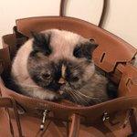 RT @lulitacarlos: Es el día internacional del gato...