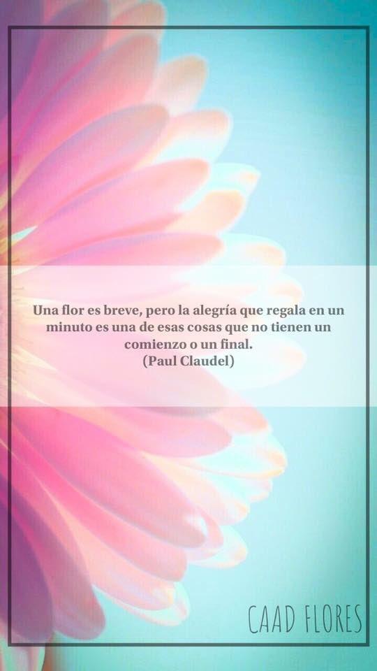 Caad Flores På Twitter Feliz Martes A Todos Floreria