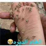 RT @sh0sh_alharbe: إللي ذاق المها رتويت 😂💔   #انا_...