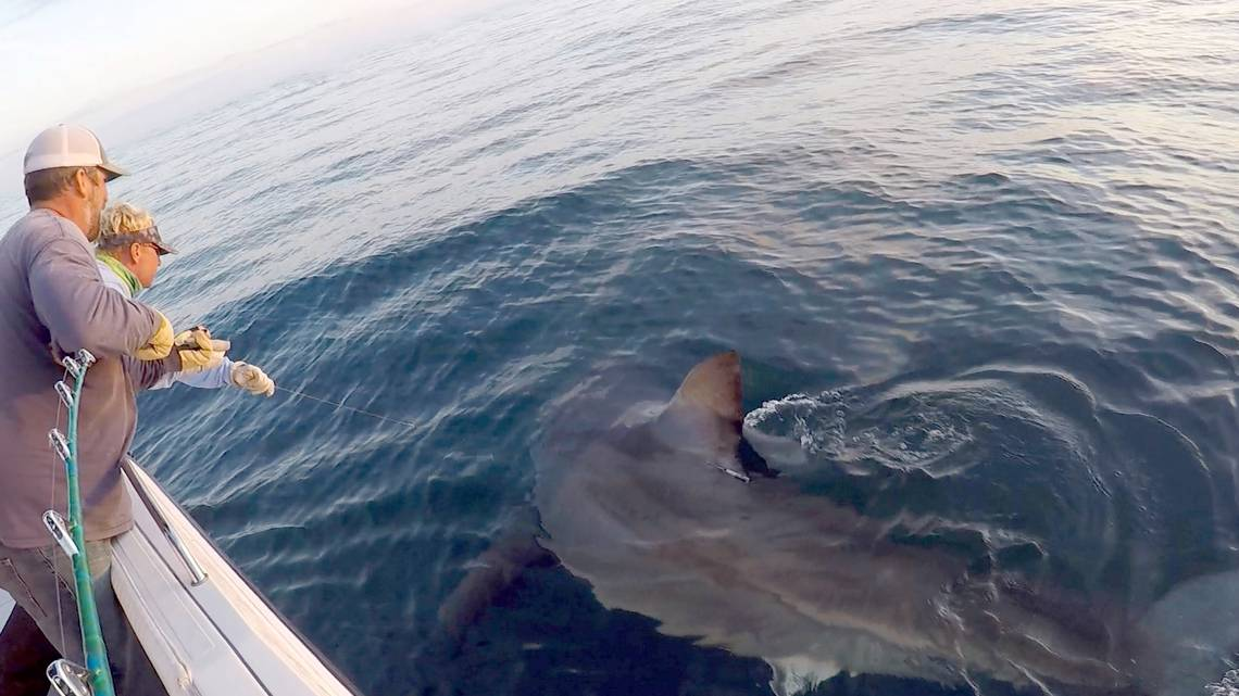 Hilton Head fishing crew catches 'massive' 16-foot, 3,000-pound great white shark https://t.co/tpDl48vy2c