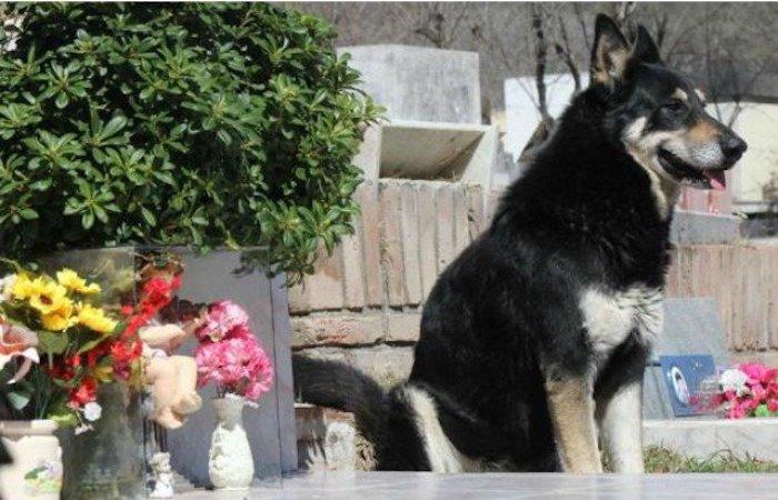 Capitán, el perro más fiel de Argentina, muere tras velar la tumba de su amo por más de una década https://t.co/tujiU0hxdE