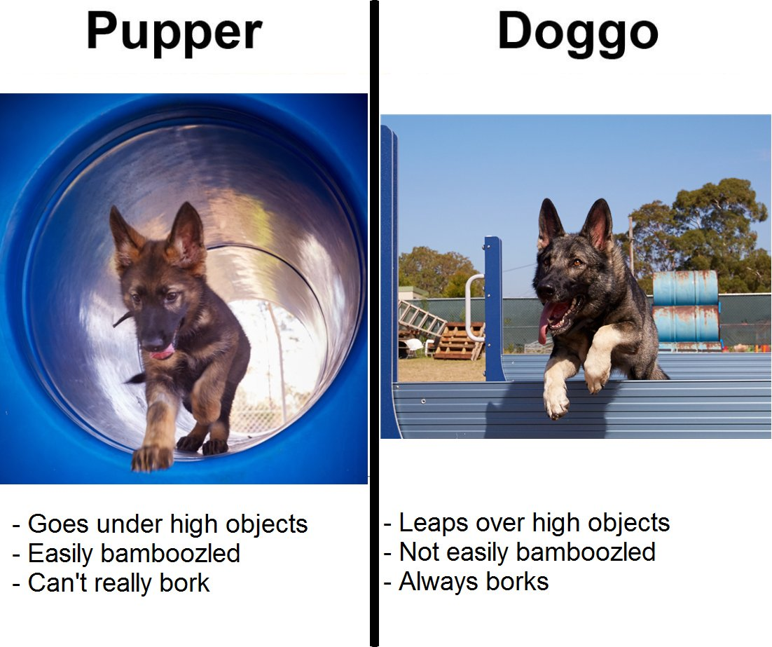 From police pupper to professional doggo...