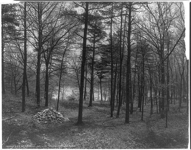 En 1845, Henry David Thoreau construit sa cabane dans les bois, proche du lac de Walden, et décide dy vivre pour sucer toute la moelle de la vie. En quoi ce départ est-il un acte éminemment politique ? franceculture.fr/emissions/les-…