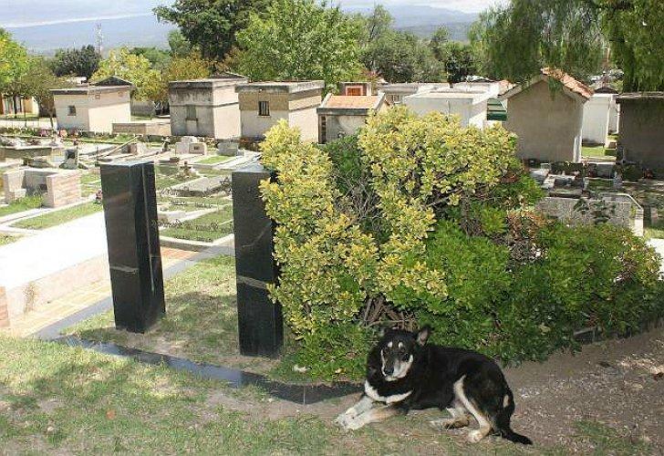"""La tierna historia de """"Capitán"""", el perro que visitó la tumba de su dueño durante 11 años: https://t.co/gol5S32jj1"""