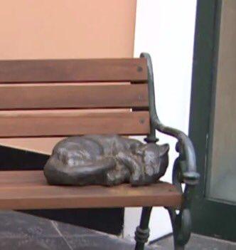 @kulturistan 21. yy Narmanlısında kedile...