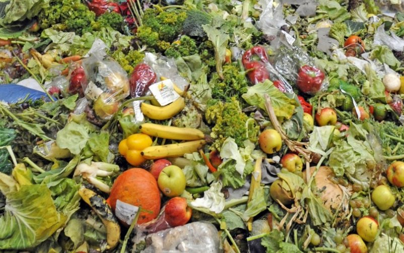 Food Waste image-01