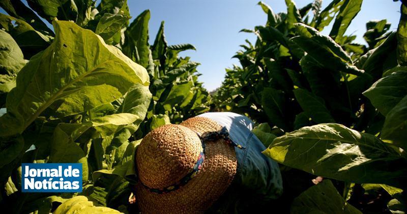 GNR apreende 334 quilos de folhas de tabaco na A1 https://t.co/NCKSoUx6KD