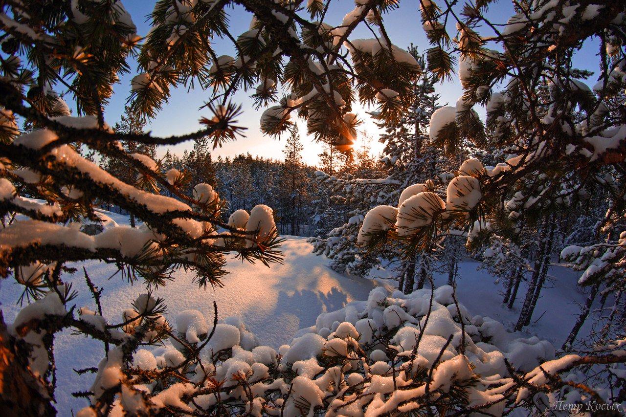 зима необычные деревья фото руки это