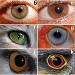 瞳の色にバリエーションがあるのは、驚きの条件を満たしている生物だけだった!