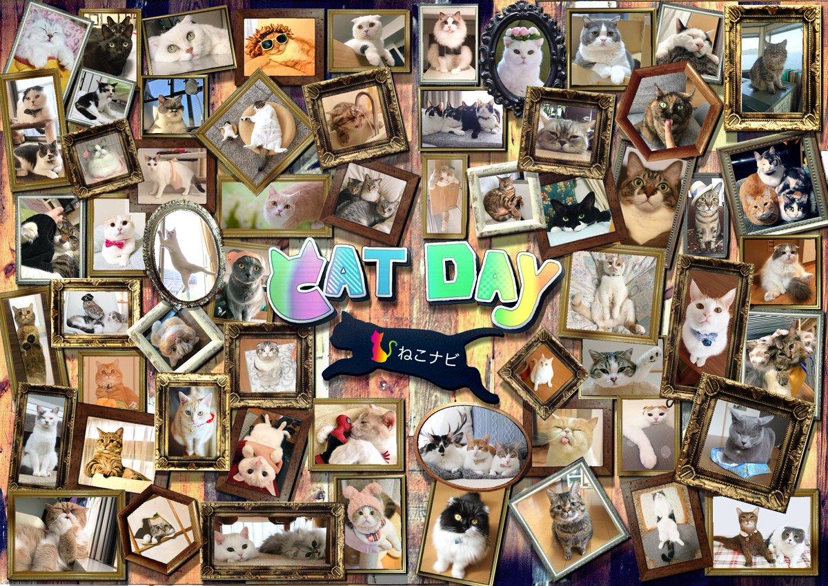 本日、2月22日は『にゃんにゃんにゃん』で猫の日です!!  #猫の日 nekonavi.jp/archives/41562