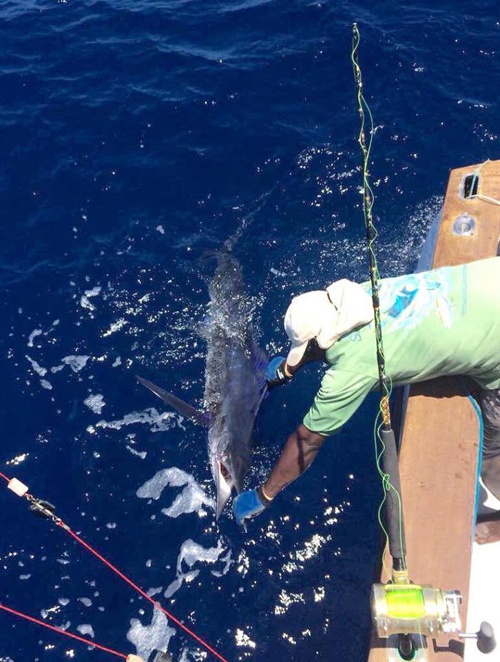 Watamu, Kenya - Soolyman released a Striped Marlin.