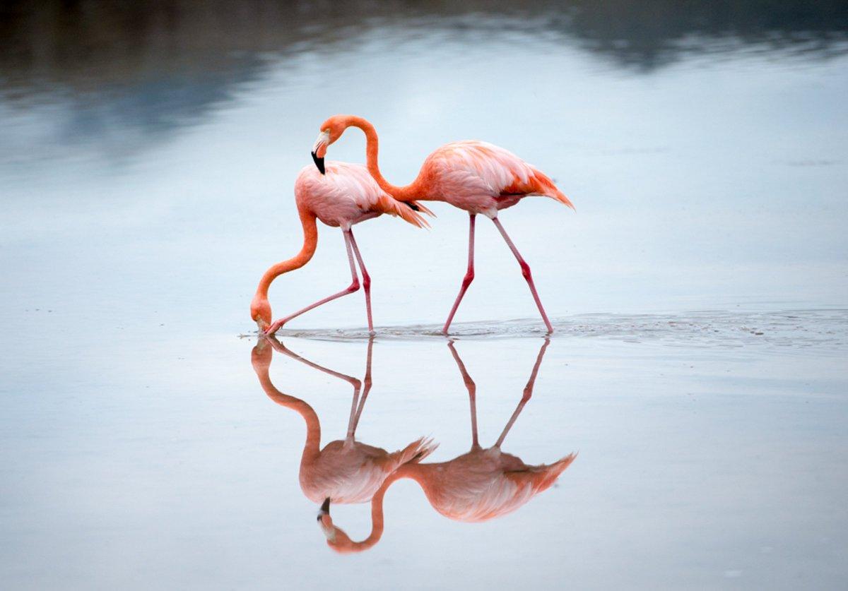 Audubon Florida on Twitter: