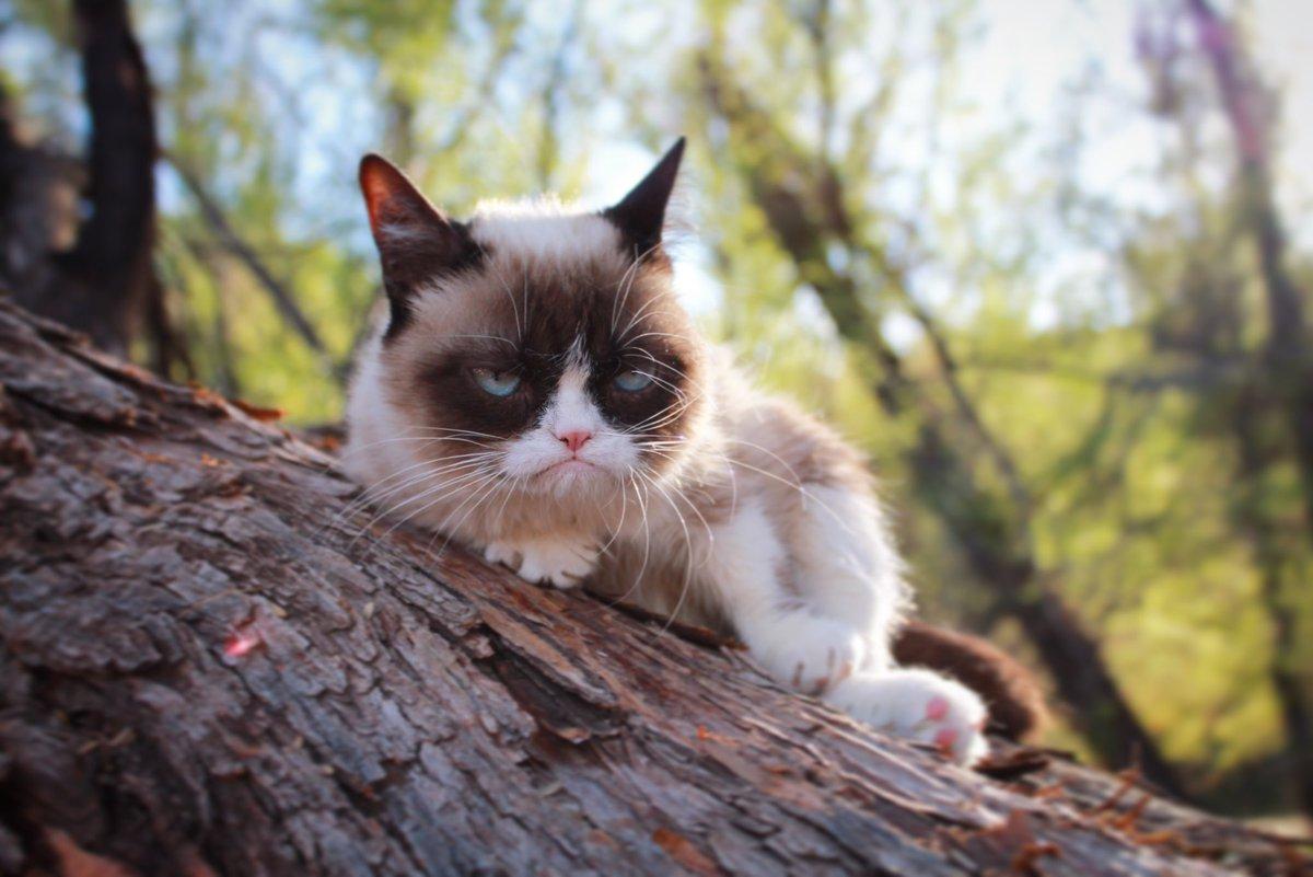 Grumpy Cat (@RealGrumpyCat) on Twitter photo 2018-02-21 19:17:56