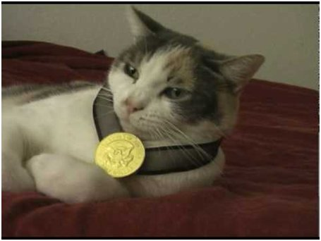 Beansie forgot he was a competitor in the #Olympics and fell asleep.   He woke up with this medal.   His event is #freestyle couch.
