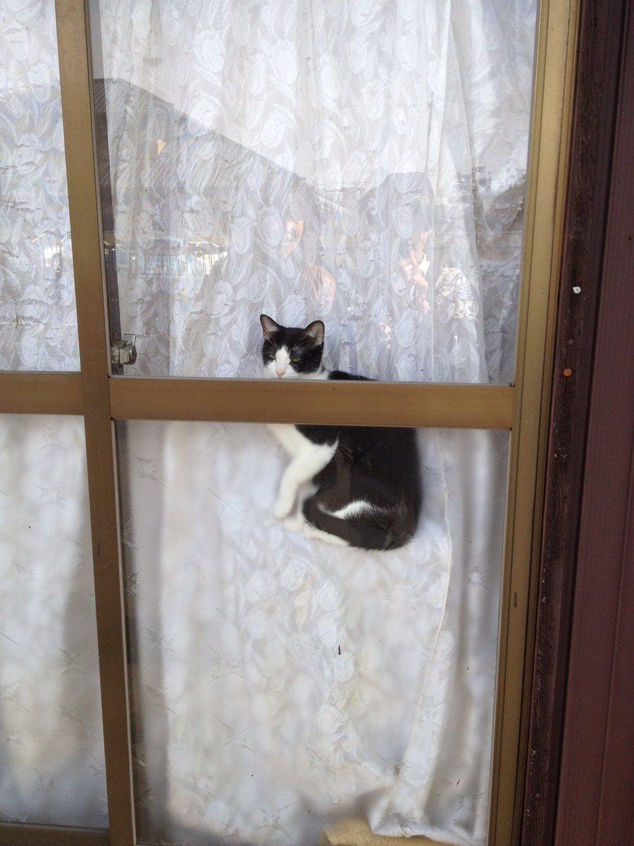 イリュージョン🐈 #猫の日 https://t.co/xMREaTw880