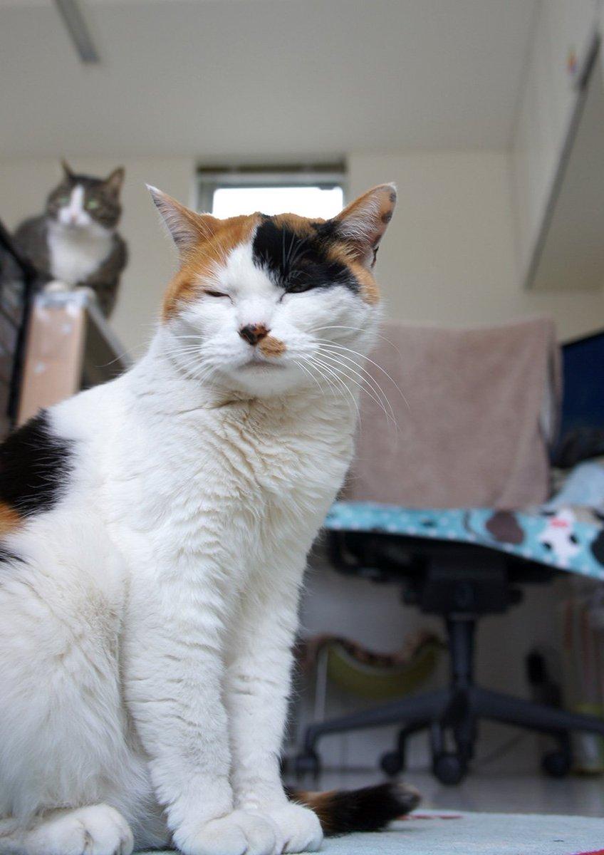 2月22日ニャンたちの日。特別なこともなく平和に平凡に猫たちが側にいてくれるだけ...