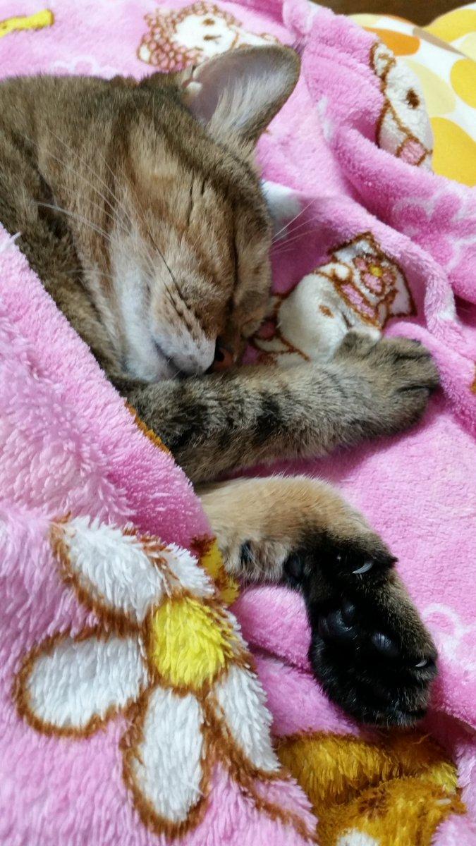 うちのお猫① #猫の日 #猫の日おめでとう #タイムラインを寝ているお猫でいっぱ...