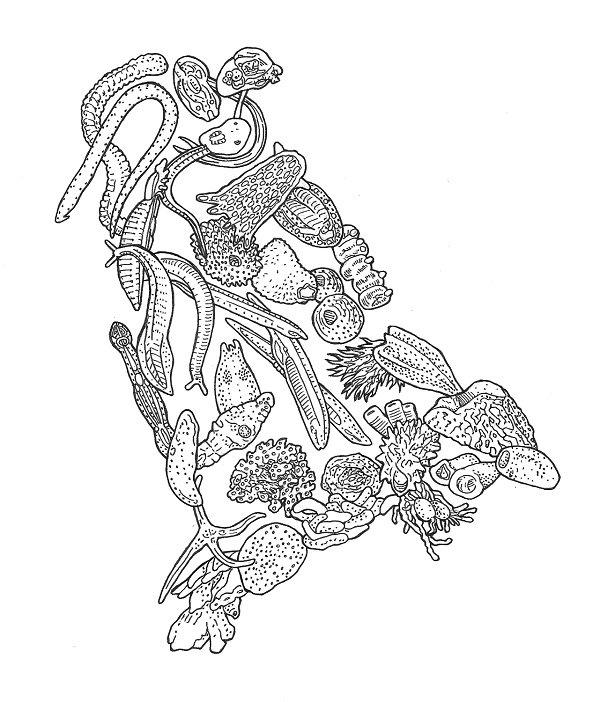 placozoa wikipedia