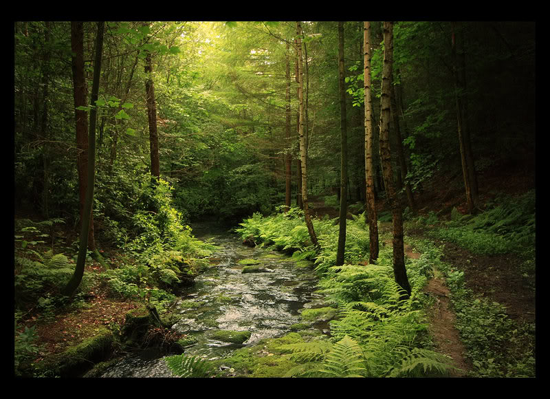 test Twitter Media - The hero in my fantasy fiction book is the Master of the Forest. I can picture him in this setting — a solitary figure, at one with nature, and gifted with the ability to communicate with animals. #Tenfingerstouching https://t.co/aasJKPVqWR #Forest https://t.co/iPQLARPr33