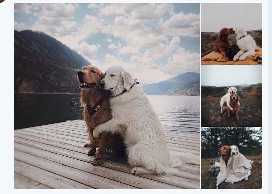 Estos perros tienen mas vida amorosa que...