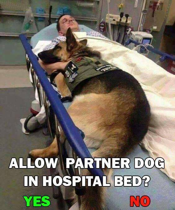 YES! Absolutely 🐾💗🐾