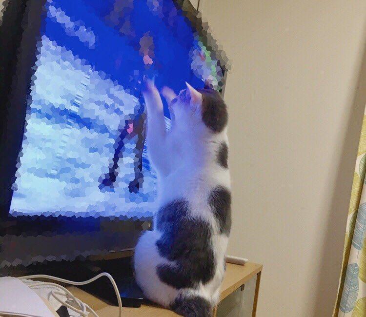 こんばんは~☺︎ 今日2月22日はネコの日!!!!🐱 と言うことで、 我が家のニャンコの写真を!💙✨ 捕まえられないイチ子と、捕まるイチ子。(笑)