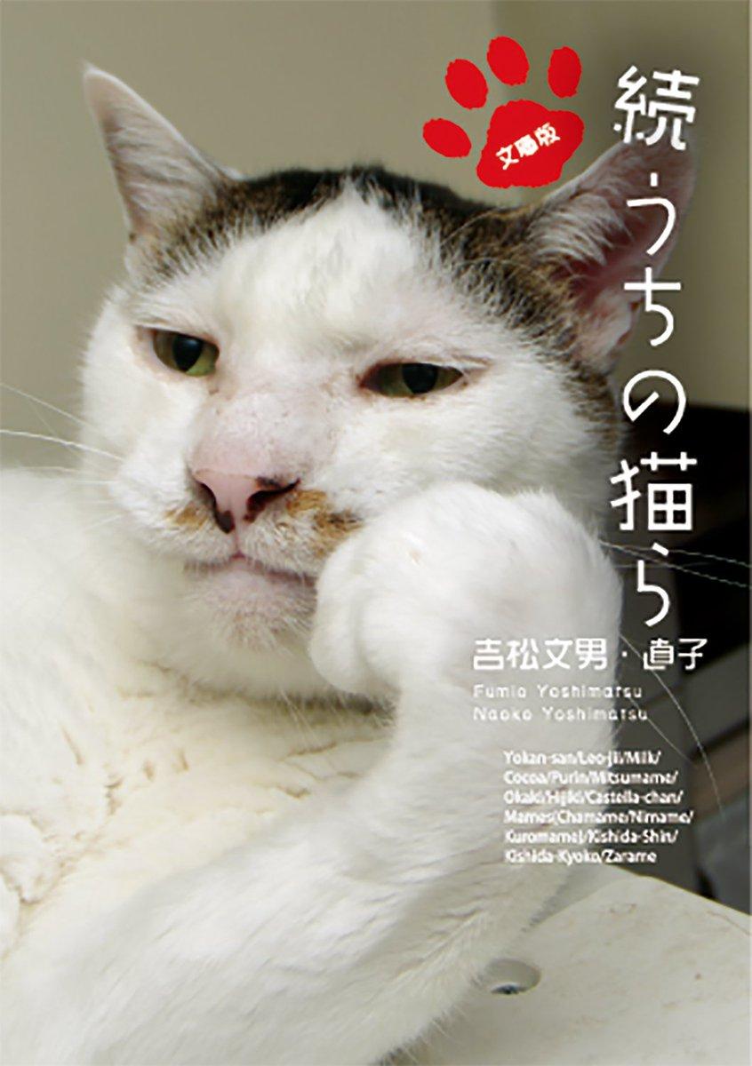 猫 人気 ブログ