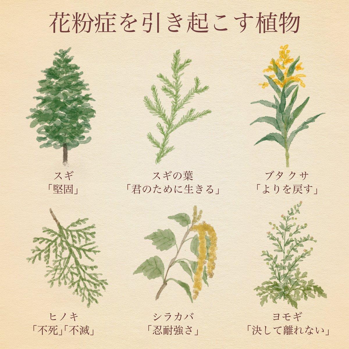 寒さが去ると花粉が来る。 花粉症を引き起こす植物の花言葉を見ると、もう彼らとは別れられない気がする。