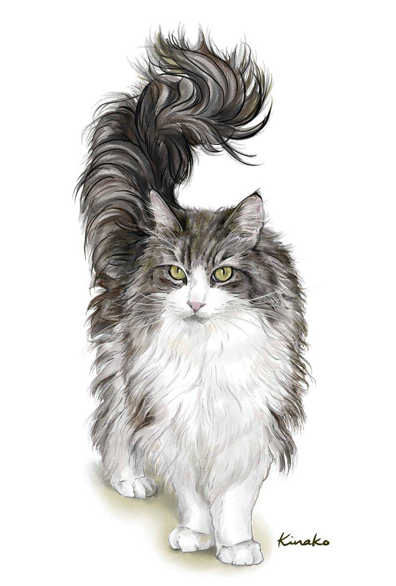 """きなこ (猫の絵を描いています) on twitter: """"この立ち姿があまりにも"""