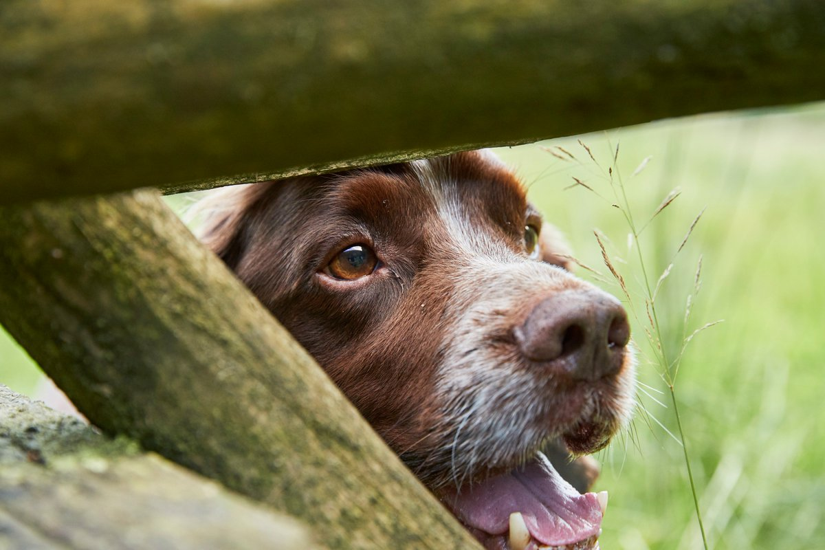 For #WalkingTheDogDay why not check out our dog-friendly page with lots of great walks to try this year - bit.ly/2GzO3ux