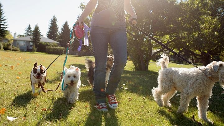 5 questions to ask before hiring a dog walker #WalkingtheDogDay on.gei.co/2H1yT2h