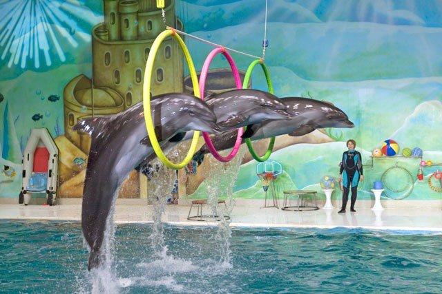 سعوديون في الإمارات On Twitter ألعاب الدلافين ضم حديقة الخور