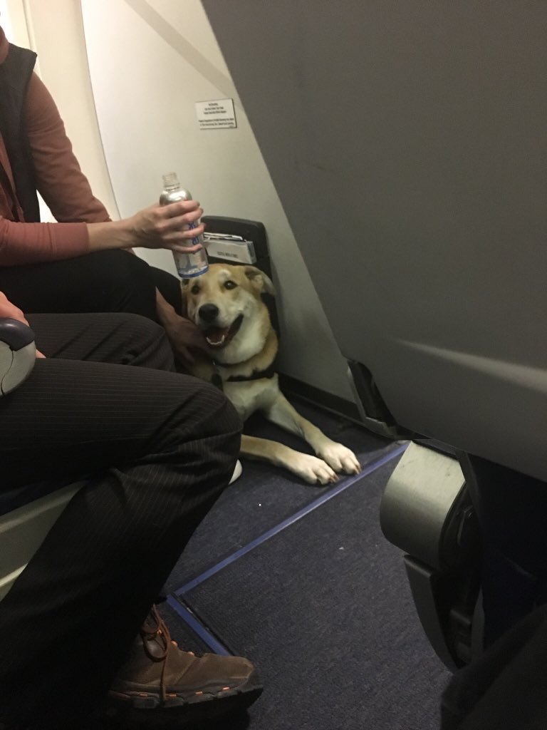 'Emotional Support' Dog on Southwest Flight Injures Child