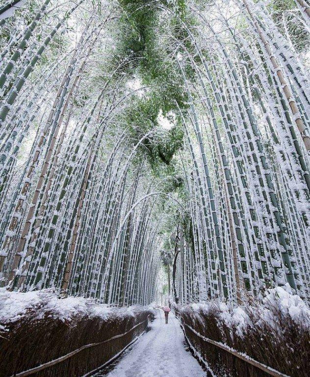 поместить кнопки японский лес зимой фото стихах