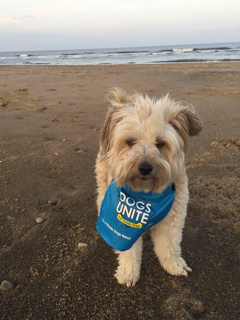 @dogsunite puddles mid walk #hero #WalkingTheDogDay