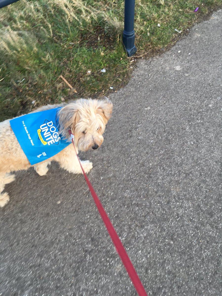@dogsunite puddles enjoying her #WalkingTheDogDay super hero walk for @guidedogs